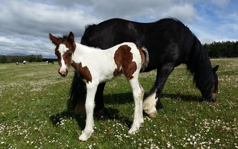 Eight foals - four colts and four fillies - were born at Belwade Farm.