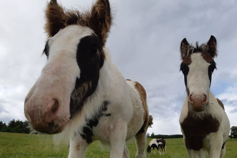 The foals now have a much brighter future, thanks to rescuers.