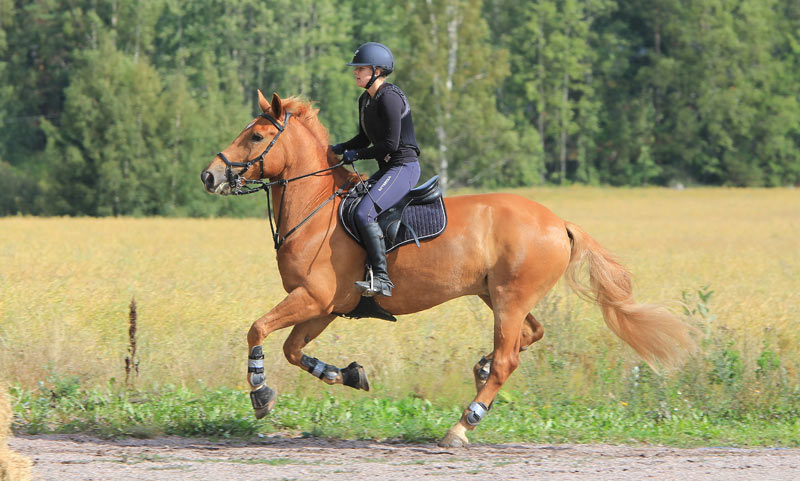 "The webinar ""The Role of Cardiorespiratory Health on Equine Performance"" this weekend will explore how the respiratory system works, and ways training and exercise factor into airway function and overall performance."