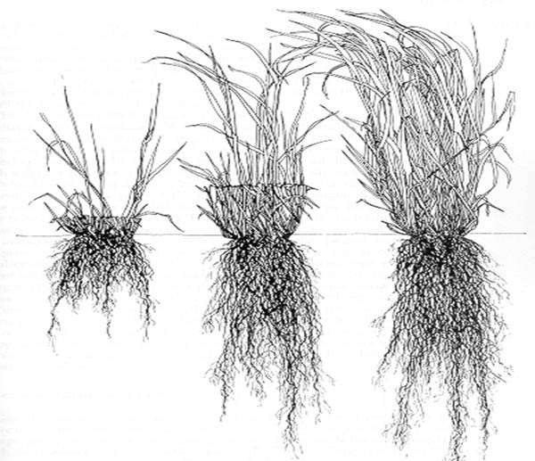 Think of the soil surface as a mirror, whatever is growing above it is also what is growing beneath it.