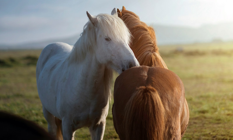 Other coronaviruses have been reported in cattle, camels and humans in Israel, but until now, coronaviruses have not been reported in horses.
