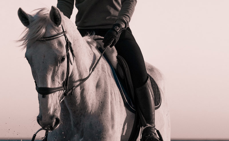 Despite our better understanding of equine training and welfare that reflect several decades of study, the dissemination of the results, and thus their ability to forge change, has been limited.