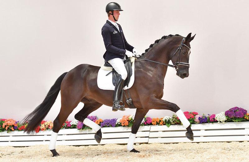 Fürstenerbe (Fürsten-Look) sold for €126,000 at the 93rd Fall Elite Auction at the Oldenburg Horse Center in Vechta last week.