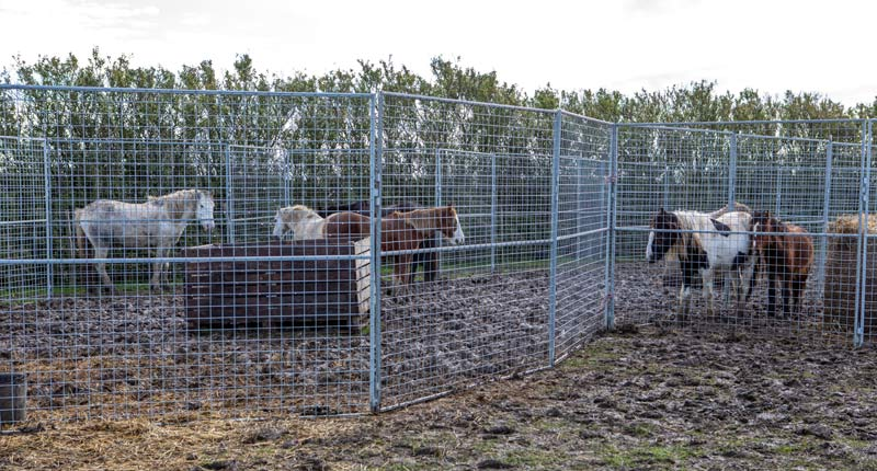 Vets and charities pull together to provide urgent care for over 70 horses in Cambridgeshire