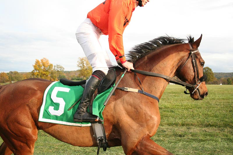 Britain's Horserace Betting Levy Board is working to re-establish the equine infectious disease surveillance work that had been performed by the Animal Health Trust (AHT) until its closure last year. It will benefit all horses, not just thoroughbreds.