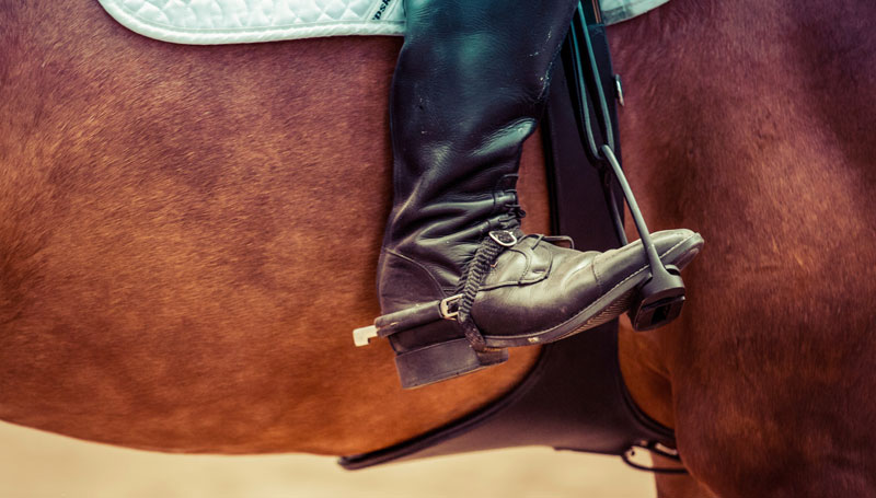 Survey to understand peoples' perception of Equitation Science