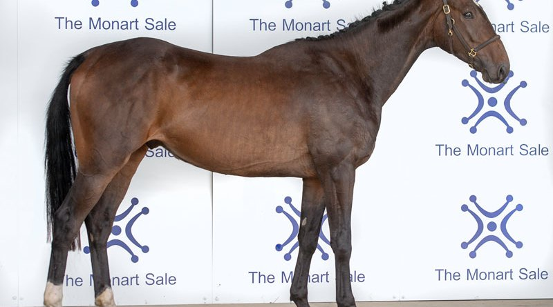 Kilbunny Blue Bird sold to British buyers for €29,000 at Ireland's Monart Sale, which was held online this year.