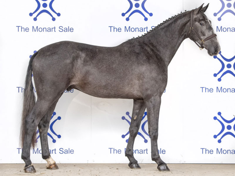 Three-year-old Mei-Fleure sold to US eventer Katie Malensek for €26,000 at Ireland's Monart Sale.