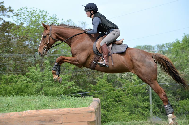 Devon Griffin and Quizzical Quartz in an eventing competition.