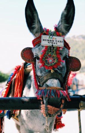 "A ""burro taxi"" in Spain."