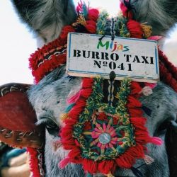 "A ""burro taxi"" in Spain. Researchers have called for robust funding of studies into infectious diseases in donkeys and mules. Photo by Caleb Stokes"
