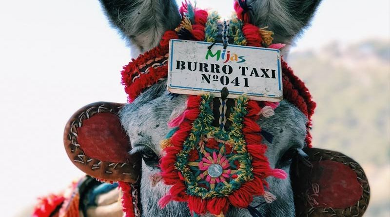 "A ""burro taxi"" in Spain."