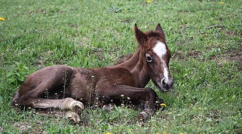 """Renowned equine reproduction expert """"Twink"""" Allen has died at the age of 80 after a short illness."""