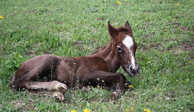 Foals and young horses experience inconsistent, awkward stages of growth and development and some youngsters incur injuries that will not become apparent until much later into their ridden years.