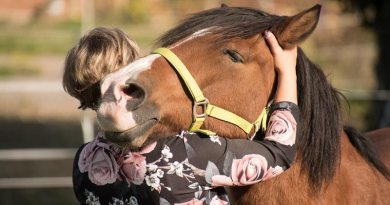 """""""Older horses were bolder than younger horses, but horses started under saddle at an older age were less bold and independent than those started at a younger age."""""""