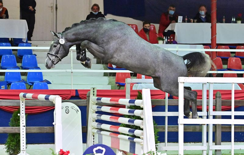 A son of Comilfo Plus Z who sold for €140,000 was the highest price of the jumping stallions at the recent Oldenburg Stallion Market.