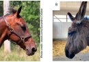 A whorl of difference: Scientists compare horses and donkeys