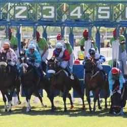 The Maryland research revealed that 13% of track injuries occurred when the horse and jockey left the starting gate. (File image by H. Hach)