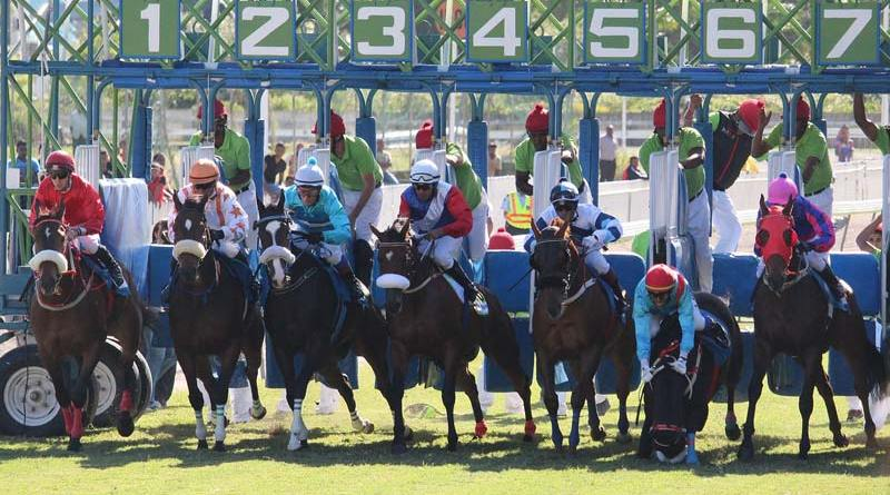 The Maryland research revealed that 13% of track injuries occurred when the horse and jockey left the starting gate.