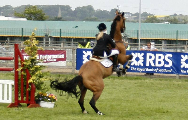 Showjumping horses had an increased risk of rearing, and companion horses and Pony Club horses an increased risk of bucking when compared to pleasure-riding horses.