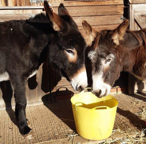 Marian, left, and Max share some dinner at their new home.