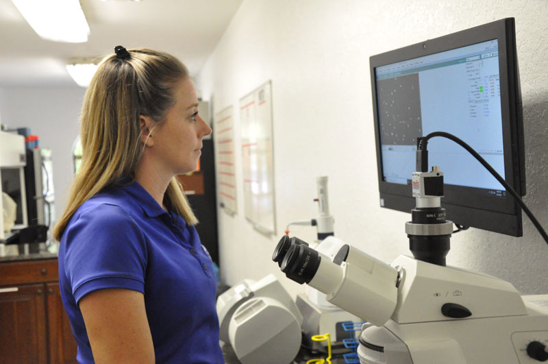 Dr Katie Atwood analyzes a stallion's semen through Palm Beach Equine Clinic 's CASA system, allowing vets to determine the concentration of sperm and its motility, morphology, vitality, DNA fragmentation, and acrosome reaction.