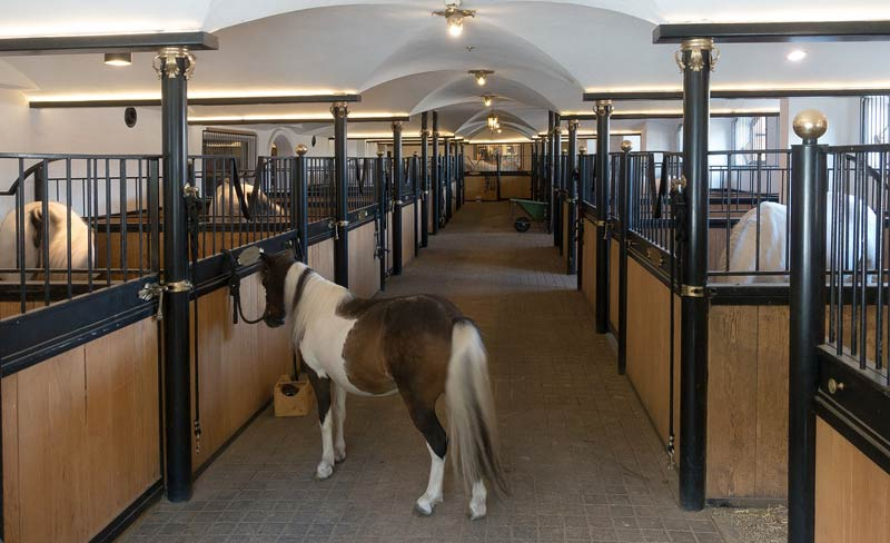 The study compared stabled horses and those living at pasture.