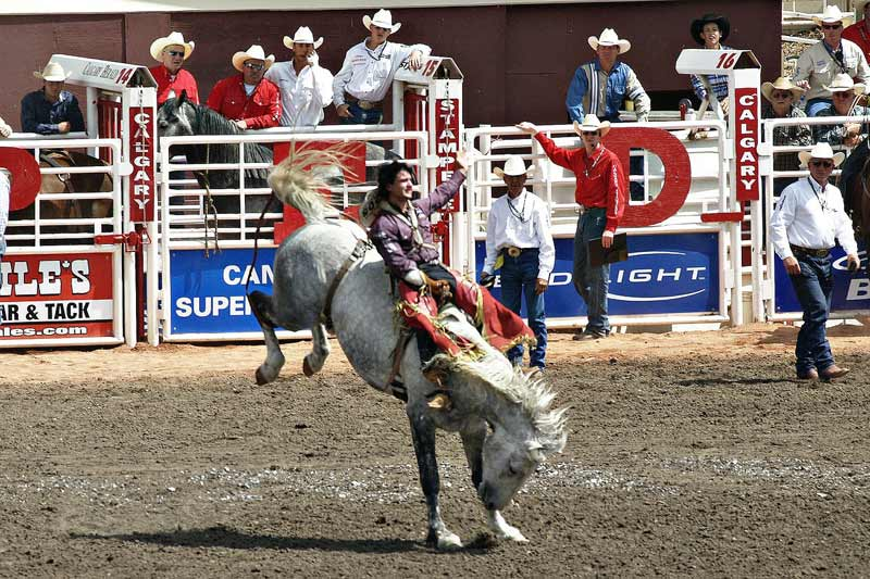 Action at the Calgary Stampede