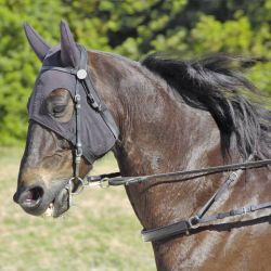 The snaffle trotting bit was the most common bit among all the breeds, worn by 98 horses. Half of them - 49 - were found to have moderate or severe oral lesions after racing. Image by Scottslm