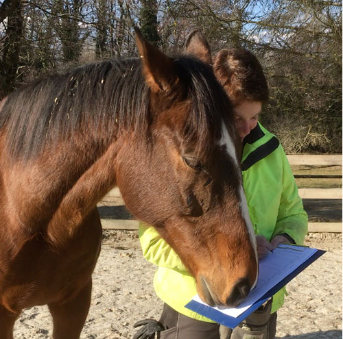 The 15-item questionnaire is based on changes in behavior in horses diagnosed with osteoarthritis. The questions cover posture, facial expressions, movement and behavior.