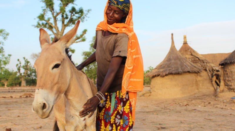 The study demonstrated the crucial role of donkeys to the local economy and household livelihoods, maintenance of tradition, and resilience across different communities in Burkina Faso.