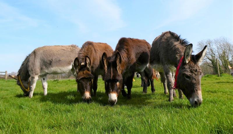 Some of the donkeys who will feature at this weekend's Sanctuary from your Sofa event.