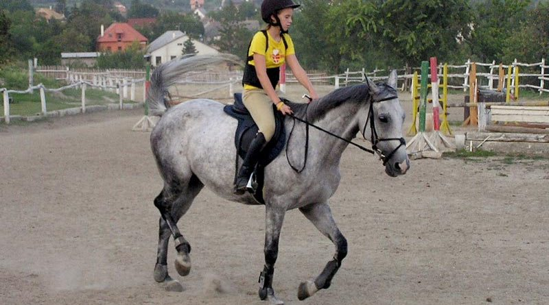 The study team set out to compare a range of blood and biochemical parameters in riding school horses, endurance horses and racehorses.