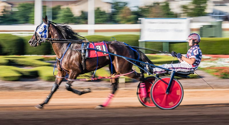 Researchers said that the distribution of lesions differed between Standardbred trotters and pacers.