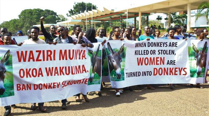 Donkey-owning communities are protesting across Kenya over the court decision to allow the resumption of donkey slaughter for their skins.