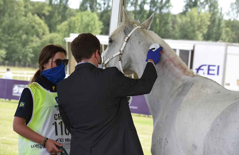 A horse undergoes at microchip check during a vet check point.