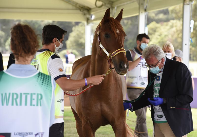 A veterinarian checks the heart rate of one of the competitors during a veterinary check.