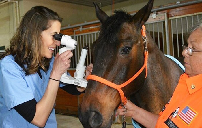 Dr Kathryn Wotman will explore equine vision in a webinar in The Love of the Horse series.