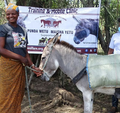 MAWO has continued efforts to provide free donkey clinics in northern parts of Tanzania, where we have treated 521 donkeys in 2021.
