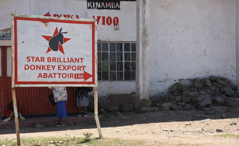 The Star Brilliant slaughterhouse in Kenya.