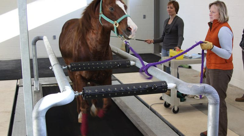 A horse being worked on a treadmill.