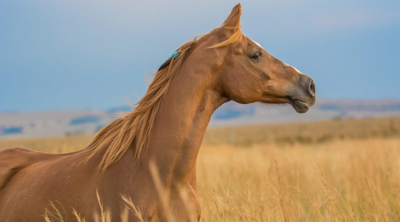 Intravenous magnesium has been used in equine events as a calming and performance-enhancing agent, with the ultimate goal of giving a competitive edge to horses that receive it.