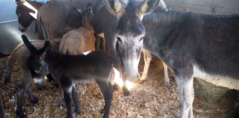 The mares and foals rescued from the Mooi River region in KwaZulu-Natal were trucked to the Kloof and Highway SPCA facility near Durban.