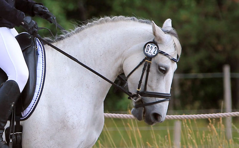 Equestrian Canada is looking to refine its rules over tight nosebands in horse sport and is launching a pilot project to assess current noseband use, rider compliance, and to find where education and awareness is needed.