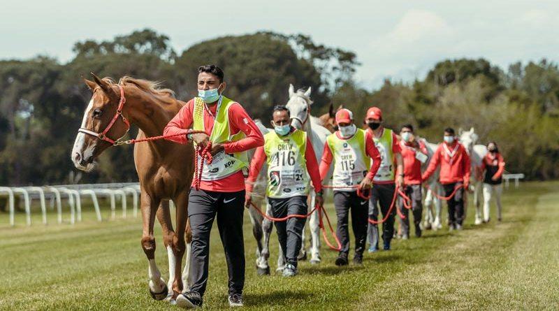 Horses at the vet check for the FEI Endurance World Championships.