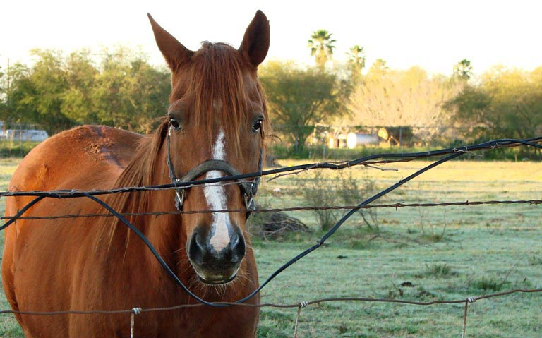 """""""When combinations of social contact, free movement and access to roughage were restricted, many of the horses had developed responses consistent with suffering."""""""