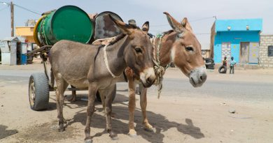 One working animal can help put food on the table for up to 30people.