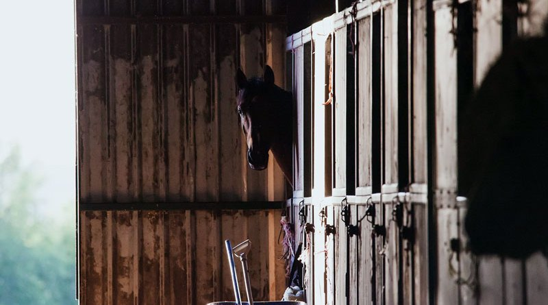 """""""Spending the night in the stables would seem to impact the well-being of the horses positively."""""""