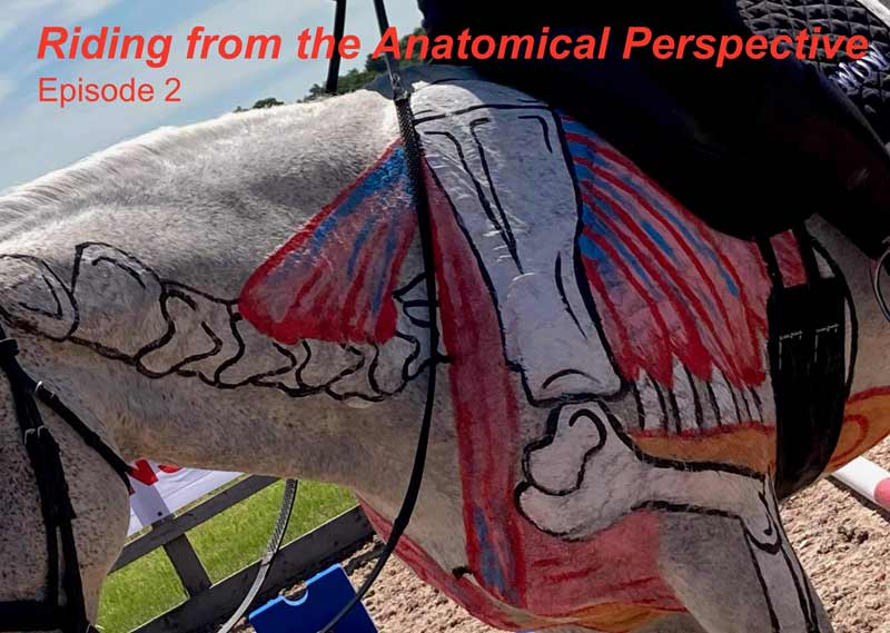 Episode 2: Riding from the anatomical perspective