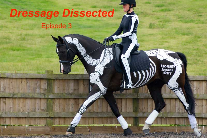 Episode 3: Dressage dissected